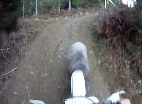 荒々しい戦い!ツーリングで遭遇した羊と「バイクVS羊」から「素手VS羊」へ!