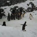無邪気に飛び跳ね喜んでいるペンギンがカワイイ