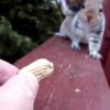 人間は怖い、でもピーナツは食べたいリスの葛藤