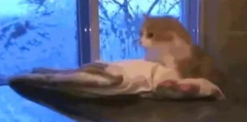 ターミネーター2(猫版)