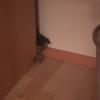 隙間を高速で出たり入ったりする子猫が可愛すぎる!