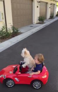 天才犬発見!車の運転がめちゃくちゃ上手いワンちゃん現る