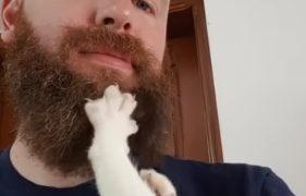 もじゃもじゃお髭をニギニギするのが好きな猫