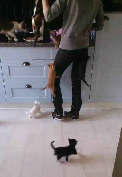 ご飯が待てない子猫達が大暴走する動画