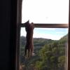 子猫だけど猫の身体能力の高さが分かる動画