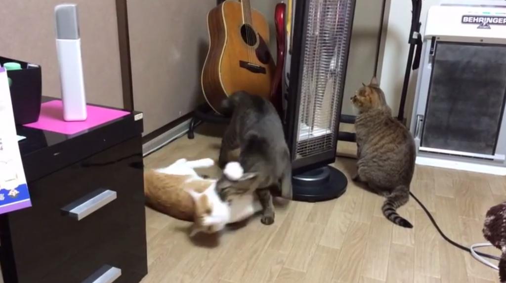 なぜか首をくわえられグルグル回される猫