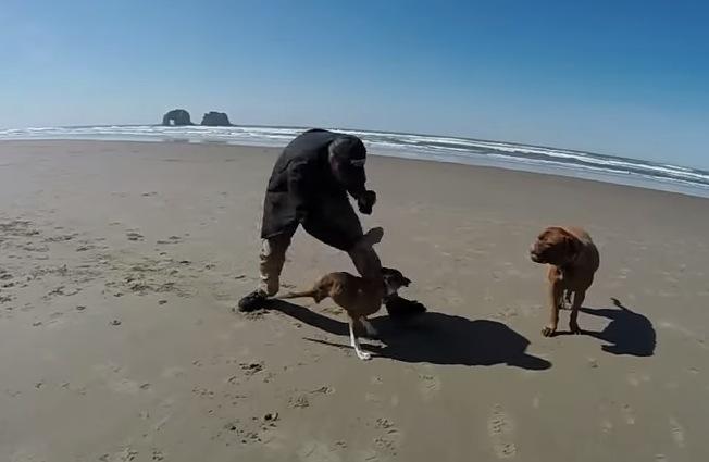 2本足の犬の力強い走りが凄い