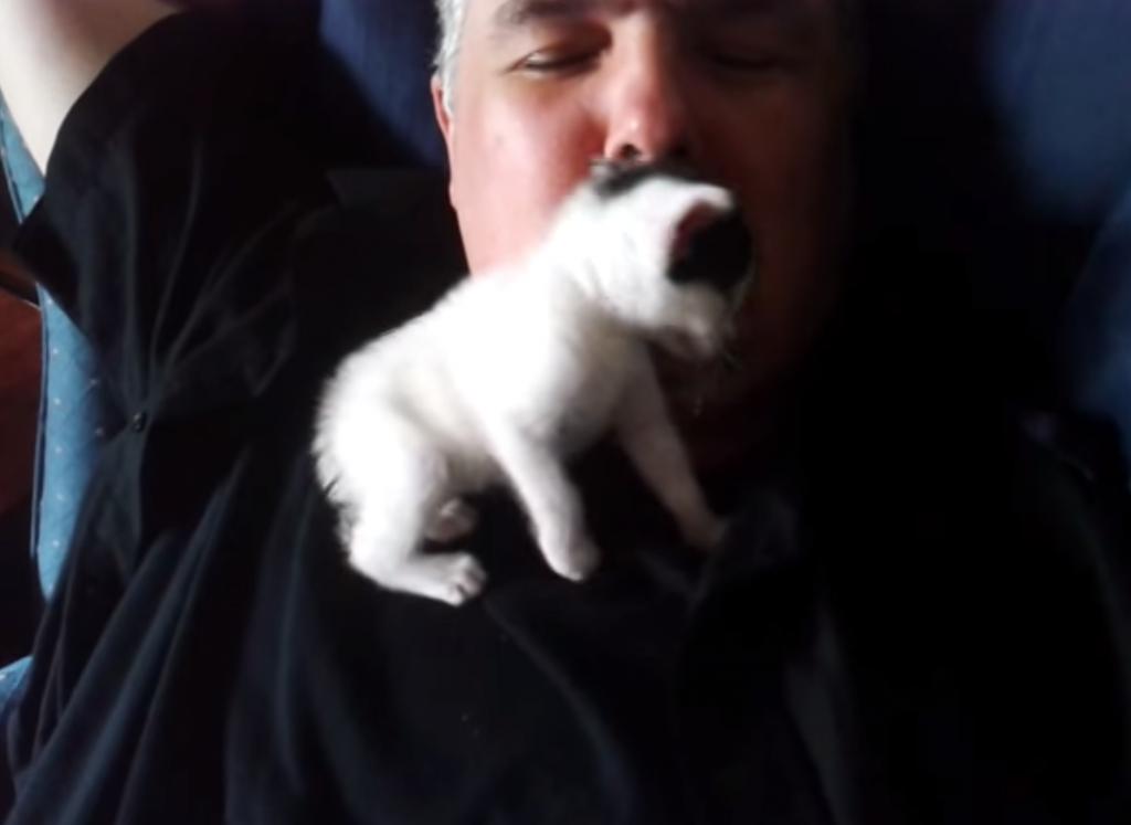 おじちゃんに超甘えている子猫が可愛すぎる!