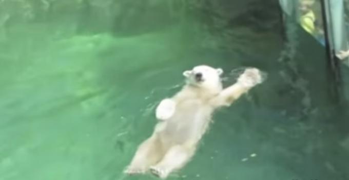 人間くさいクマの動画集