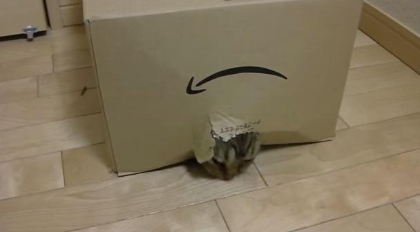 生まれるー!段ボール箱からある動物が誕生?!
