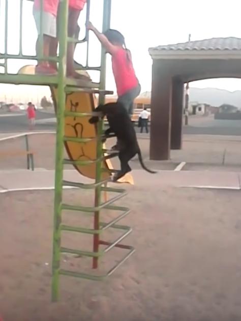 子ども達に混ざって滑り台で遊ぶ犬