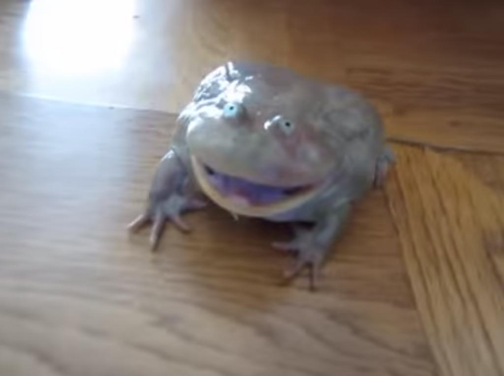 奇妙なカエルが出す奇妙な鳴き声