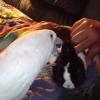 おじちゃんと一緒にウサギをなでなでするオウムの動画