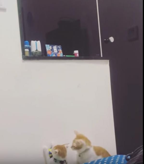 おもちゃとって〜!甘えん坊の弟猫と優しい姉猫のホッコリ動画