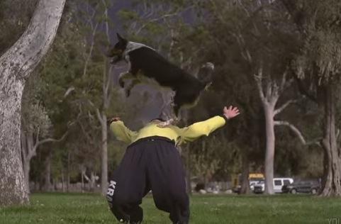 犬と飼い主コンビのパルクールがカッコいい!