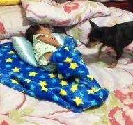 寝ている赤ちゃんに毛布をかける優しい犬
