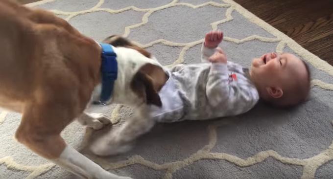 赤ちゃんをくすぐってあやす犬にホッコリ