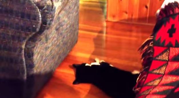 寝ている時に寝床から転落。それでも寝続ける強者な猫