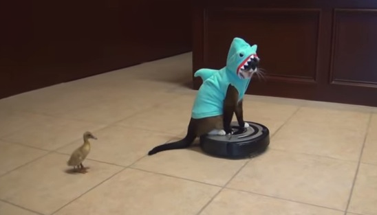 キッチンにサメが出現!ヒヨコが襲われている!!?