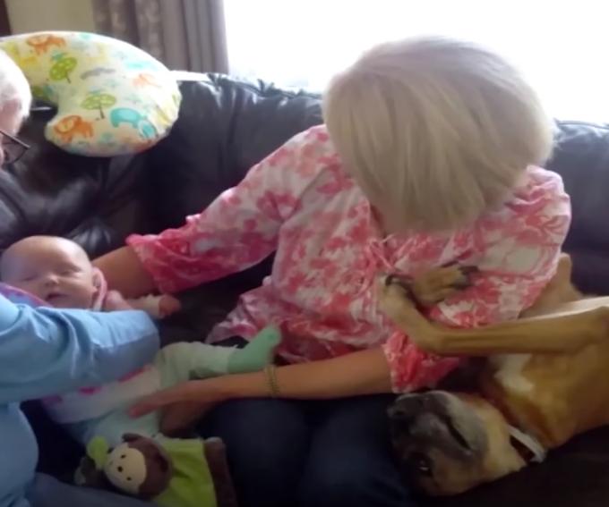 僕もかまって〜赤ちゃんを抱こうとすると腕にしがみつく犬