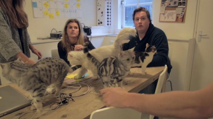 """猫用トイレなどを販売する""""Poopy Cat Office""""の会社での日常"""