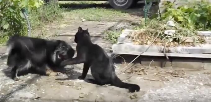 犬に技をかけて懲らしめる黒猫