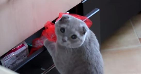 引き出しを物色する猫。見つかった時のリアクションとは!?