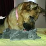 大っきな犬と小さな猫の仲良し動画