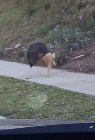 一本背負いが見事に決まった猫の動画