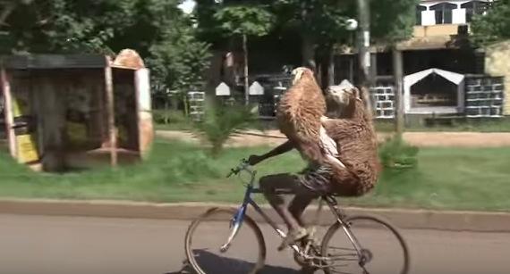 羊を二頭かついで自転車を運転するツワモノ現る
