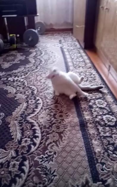 猫の一発芸『バキューンとすると倒れる』