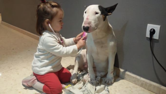 お医者さんゴッコに付き合ってくれる犬