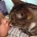 最強コンビ!猫と赤ちゃんに癒される〜