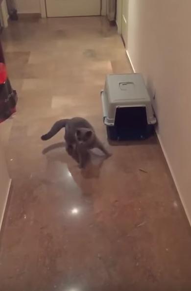 「ワォ!!!」なポーズでボールと弾む猫
