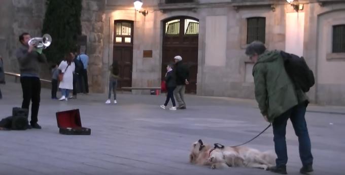 最後まで聴くんだワン!路上演奏に聴き入る犬