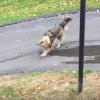 坂を流れる水を止めようとする犬