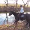 水を怖がる馬に「大丈夫だよ」とパシャパシャしてみせたら。。。