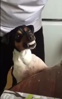 歯磨きがお上手な犬