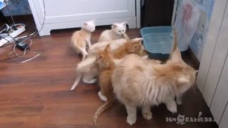 一瞬にして子猫が消える!!!?