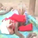 衝撃!!人間の赤ちゃんを守っている動物とは・・・!?
