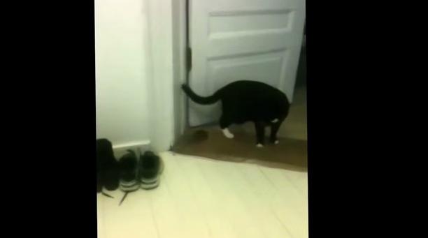 捕まえたネズミに懐かれてしまい、困ってる猫