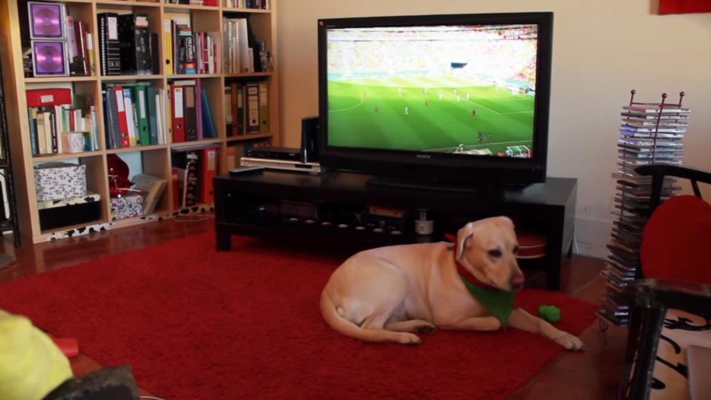 サッカー観戦で大盛り上がりする犬