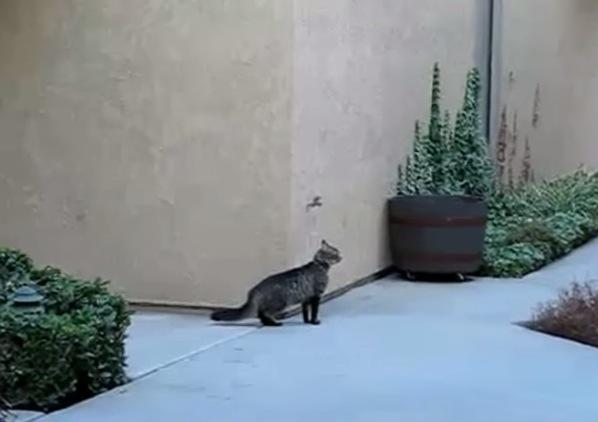 まるで忍者のよう!猫の家への戻り方がすごい