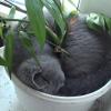 観葉植物と一体になった猫