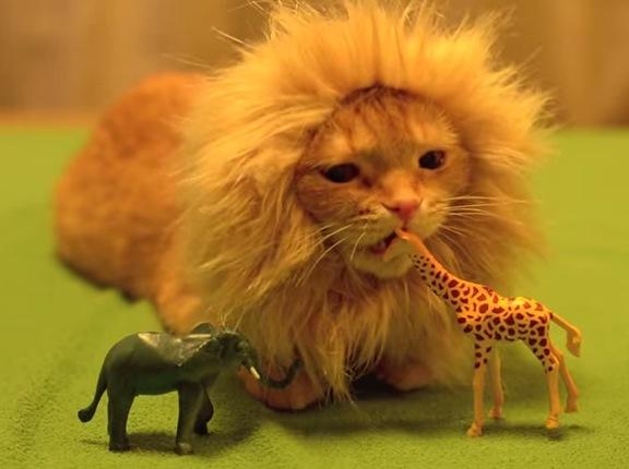 「猫ライオン、サバンナに憧れて」がめちゃカワイイ