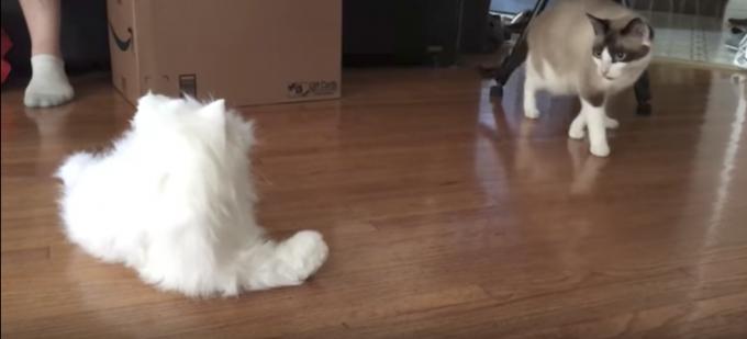 猫型ロボットと対面した時の猫達の反応