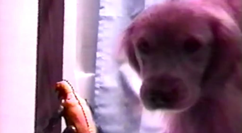犬におもちゃのゴジラを見せたときのリアクションが可愛い!