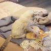 子猫の手モミモミに不覚にも寝落ちしちゃったフェネック