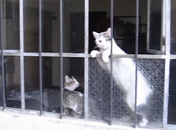 心が温まります。苦戦している子猫に手を差し伸べる母猫の動画