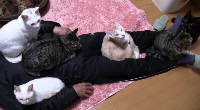猫が集まる家ならぬ、猫が集まるおじさん
